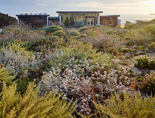 Native plants from the micro-watershed of Lands End were propagated and planted in the new dunescape.