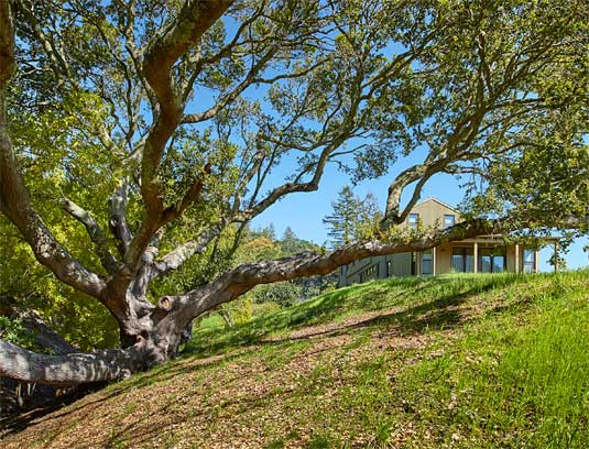 Site planning protected live oak habitat by keeping construction and structures at a distance, while showcasing magnificent specimens.