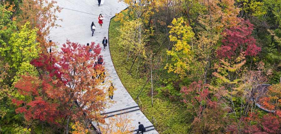 Walking the Talk–Ichigaya Forest, a Precedent towards Urban Resiliency Shinjuku Ward, Tokyo, Japan SWA Group
