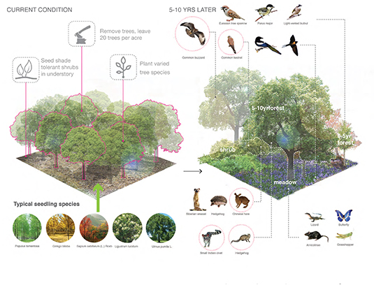 Forest restoration improves the species composition of the existing forest and promotes the migration of animals and plants across landscape boundaries. Pilot areas of regeneration aim to impact the surrounding environment, improving the overall health of the eco-corridor.
