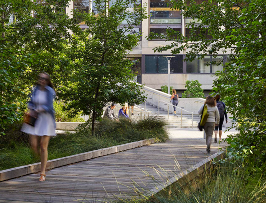 Passage though the rain garden over a boardwalk constructed of salvaged timber is now a popular cross campus route.
