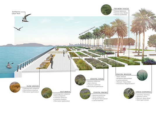 The terraced native landscape is designed for tidal inundation and the future sea level rise projections for 2100.