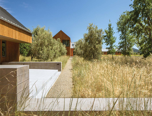 The native meadow sits in front of the guest house and oaks punctuate it. This planting palette is reminiscent of the iconic meadow hillsides with oaks found throughout Napa Valley.