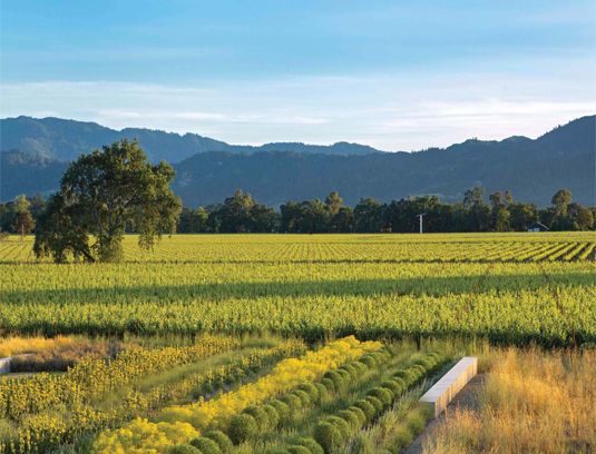 Linear bands of perennials and concrete seat walls extend to the neighbors vineyard. The orthogonal nature of the rows is not only striking but also conceptually nod to the traditional agrarian land patterns that permeate Napa Valley. Mountains that define the region cast a shadow in the background.