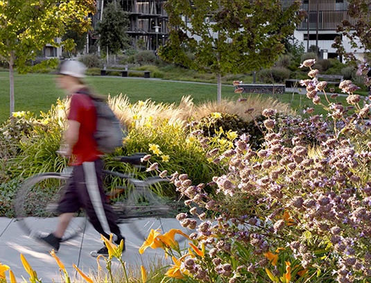The park's planting design combines natives and drought-tolerants to achieve seasonal variation, color, texture and fragrance in the sensory garden. Habitat zones utilize attractor species for butterflies, hummingbirds and other beneficial insects and avian species.