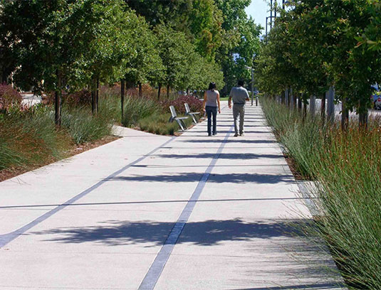 The Main Street pedestrian spine brings clear wayfinding to the length of the campus, terminating at the Bay. An allee of Cathedral Oaks, Quercus virginiana 'Catherdral', lines this axis, with rain gardens of Chondropetalum tectorum beneath.