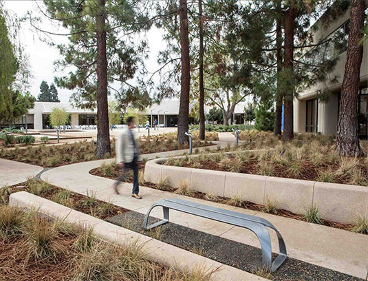 Single paving ribbons playfully interweave past existing pine trees, underplanted with Muhlenbergia rigens. Site furniture also picks up on the ribbon theme.